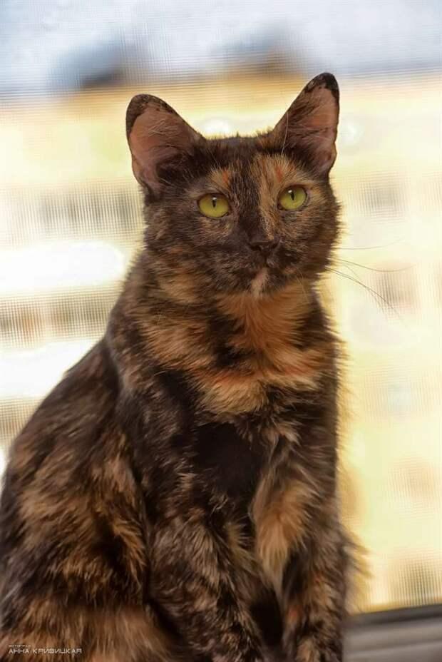 Необыкновенная кошка, с необыкновенным характером и судьбой!