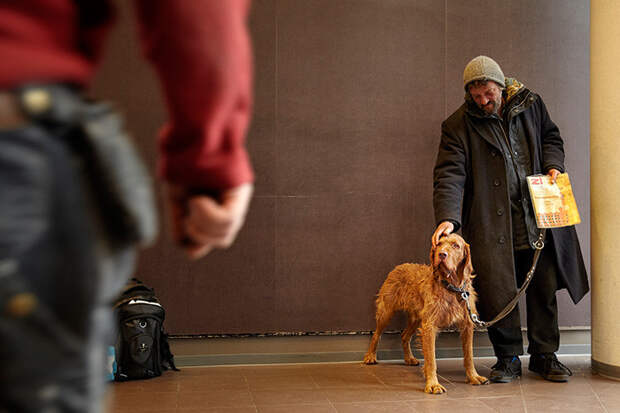 28. Этот бездомный присматривает за собаками, оставленными у супермаркета  бездомный, любовь, собака