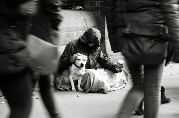 22. Бездомный с собакой  бездомный, любовь, собака