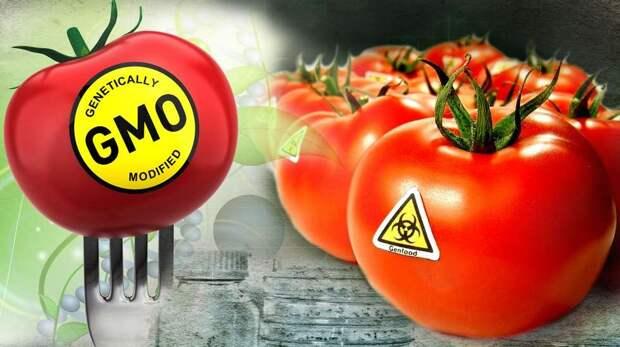 Признаки ГМО в продуктах на вашем столе
