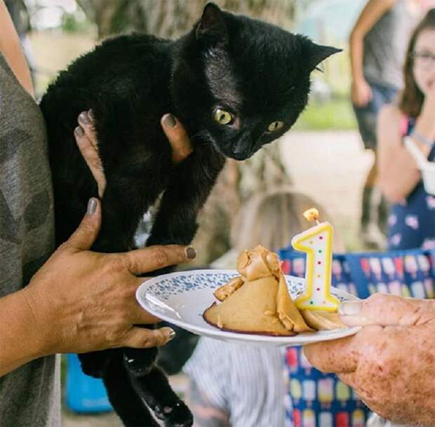 Котик и торт