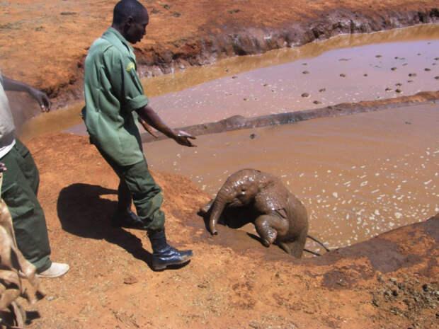 люди спасают слоненка, Африка