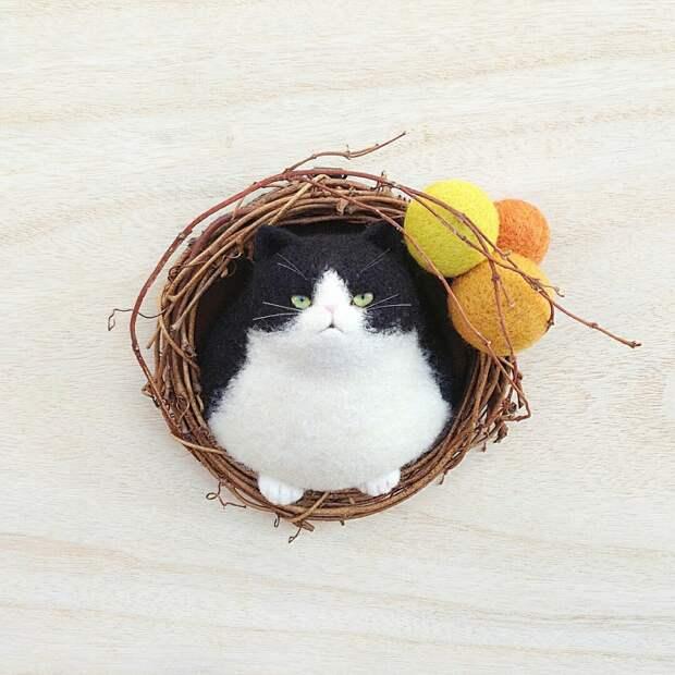Баночно - гнездовые коты Mosscat25