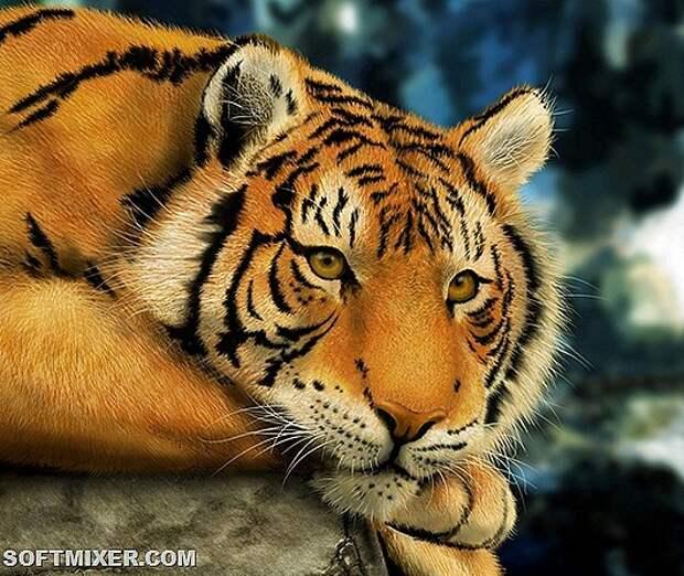 Tiger think-HD