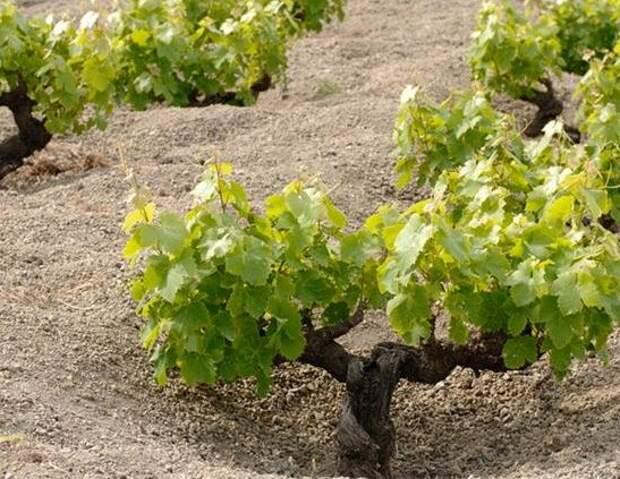 Лучшие вина Италии