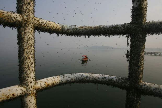 35. Мухи, сидящие на перилах над грязной водой Восточного озера (Ухань) загрязнение, китай, экология