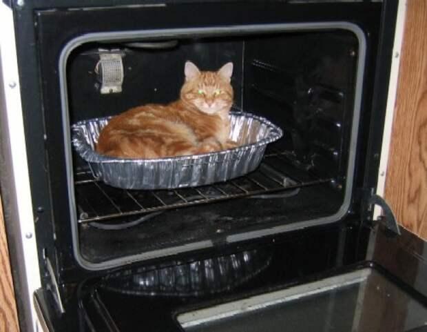 Засыпать в духовке - не очень хорошая идея для того, кто не хотел бы стать ужином.
