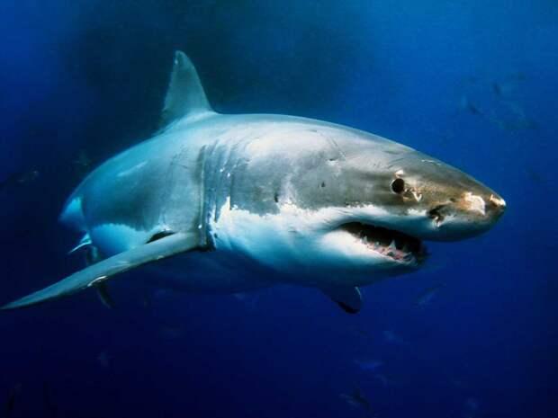 3. Так и не получается съедать нужное количество овощей Белая акула, фото