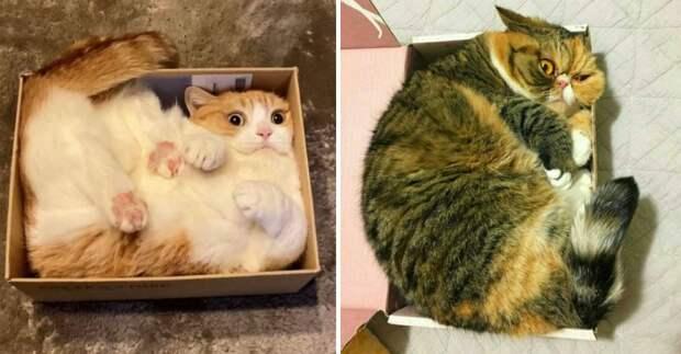Неудобных мест для котов не существует: 15 забавных фото