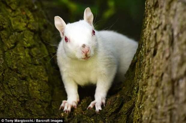 Редкую белую белочку засняли в графстве Суррей