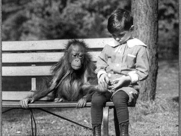 9. Общение с орангутангом животные, зоопарк
