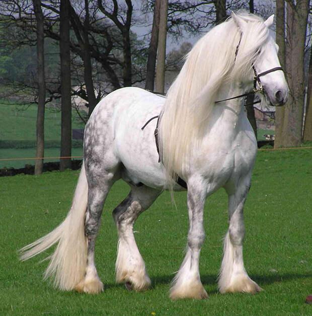 15 лошадей, от красоты которых перехватывает дыхание