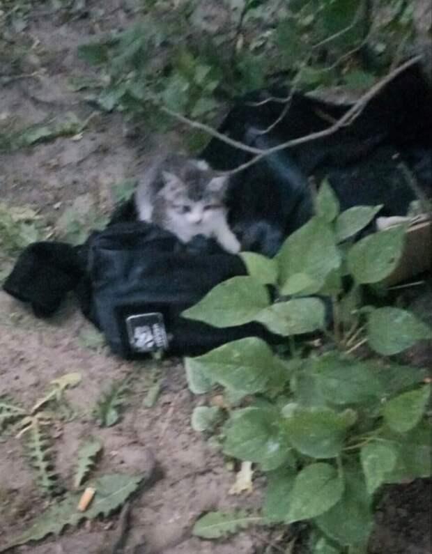 Друзья, присмотритесь к этому пушистому комочку, пожалуйста! Пока котёнок жив