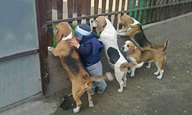 Маленькие дети иихбольшие собаки