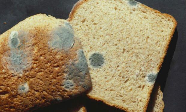 Можно ли срезать плесень с хлеба