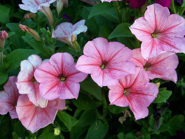 Ко Дню города в Одессе появятся десятки новых цветущих клумб*Таймер