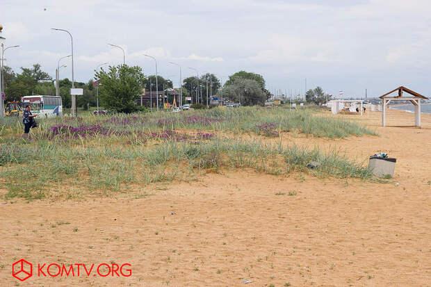 Конец мая и начало июня – пик цветения приморских трав