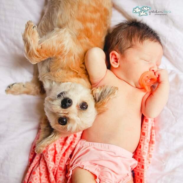 младенцы и собаки первая фотосессия (12)