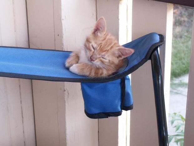 Раскладное кресло может стать удобным местом для сна.