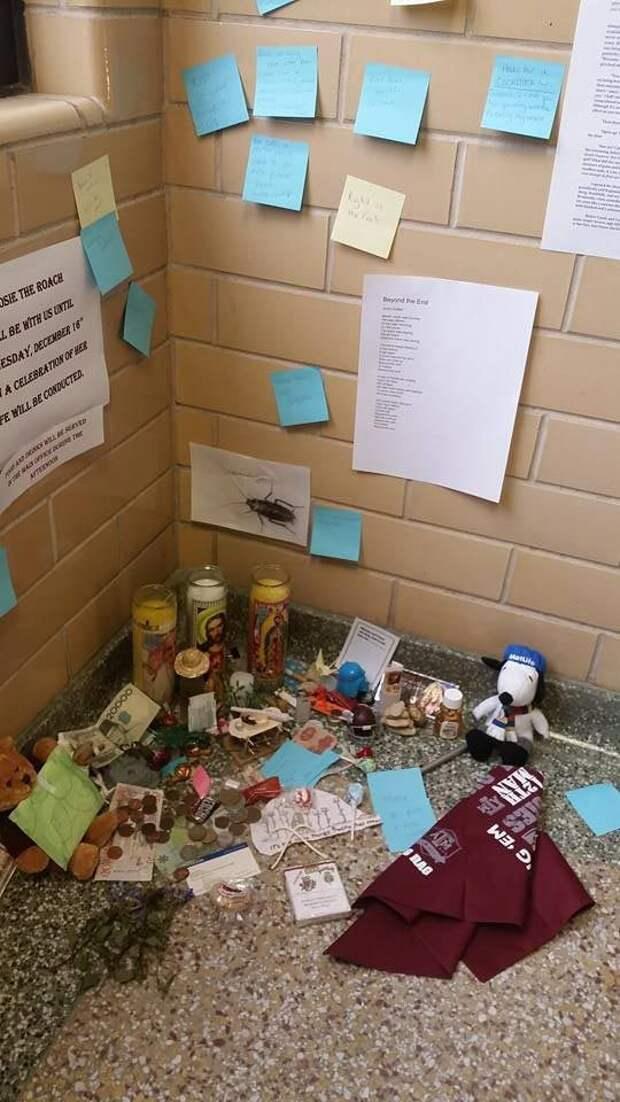 мемориал мертвому таракану, студенты устроили мемориал мертвому таракану, таракан Рози