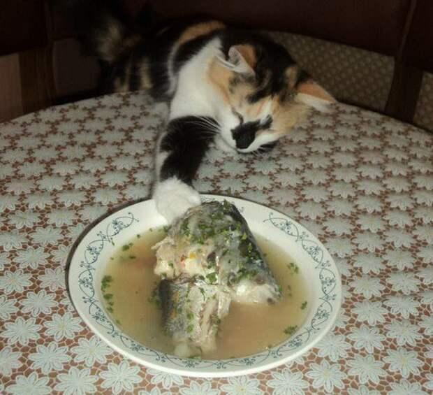 Любителям котов Trick of the week, Фишка недели, животные, коты, юмор