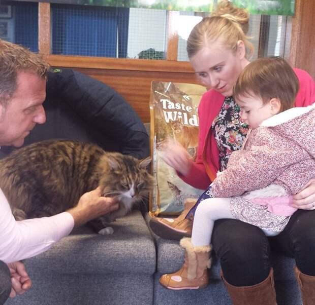 Вернувшись домой после своего побега, Клайв потолстел примерно в два раза животные, забавно, истории, история, коты, кошки, пропавшие
