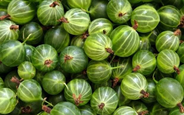 Плодовые косточки иногда полезнее, чем сами фрукты