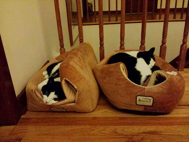 15 фотографий кошек, использующих подарки, которые владельцы для них так тщательно выбирали