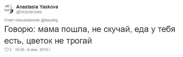 11. Тася Никитенко, животны, забавно, кот, кошка, люди, твиттер, юмор