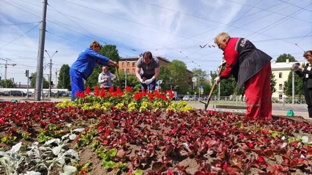 «Спор ради экономии»: стоит ли высаживать на клумбах Петербурга дорогие многолетние цветы