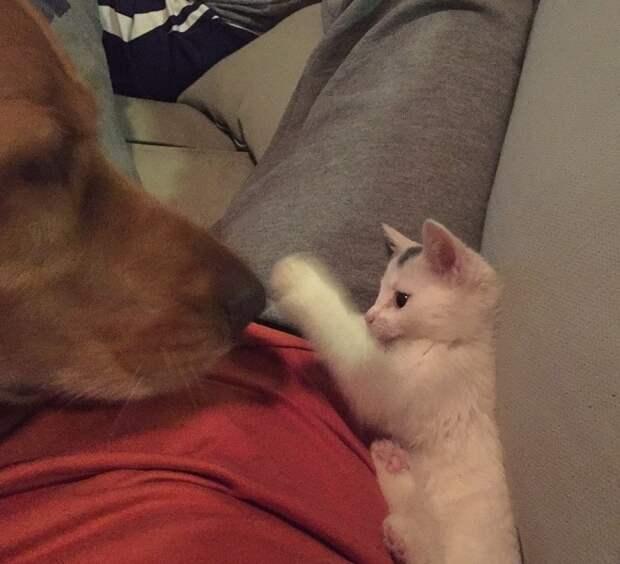 Котик трогает собаку