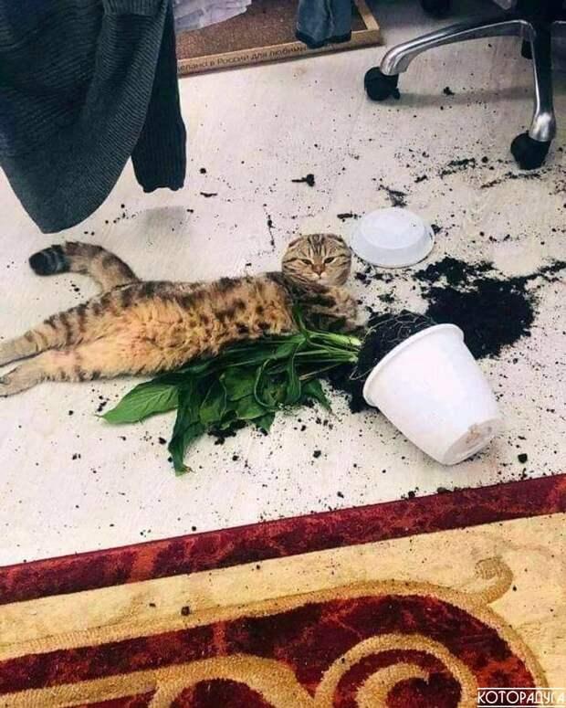 «Кошки те еще пушистые наглецы, которым нет дела до личных границ