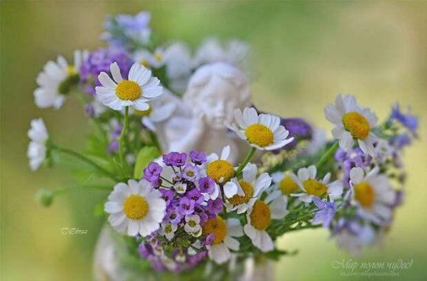 У цветов не бывает будней, они всегда одеты празднично...