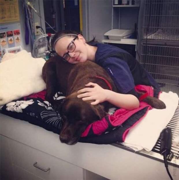 Ветеринары и их благодарные пациенты