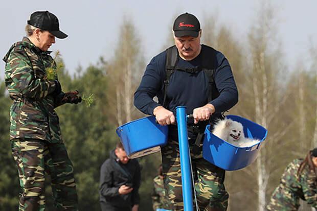 Белый шпиц Лукашенко занял стол в резиденции главы Таджикистана