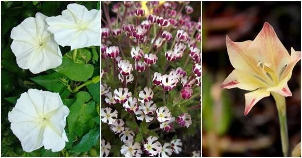 10 цветов, которые распускаются ночью. Они чудесно пахнут и подходят для сада