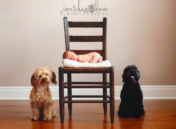 младенцы и собаки первая фотосессия (14)