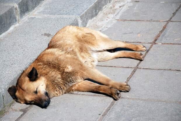 Прокуроры потребовали наказать казанскую фирму за мучительную смерть собак