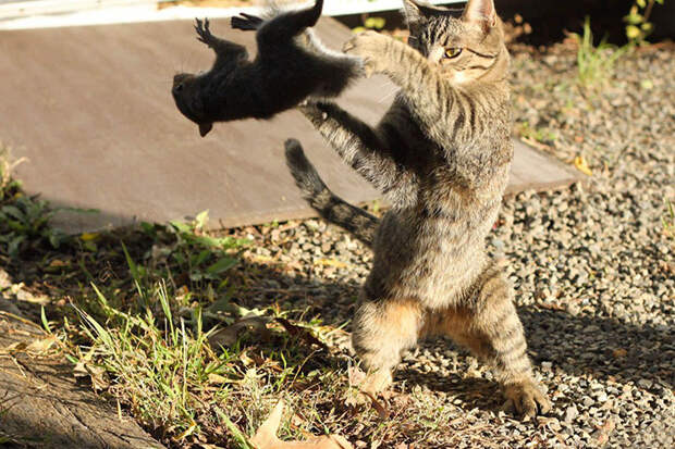 31. Кошка кидает белку момент, фотография