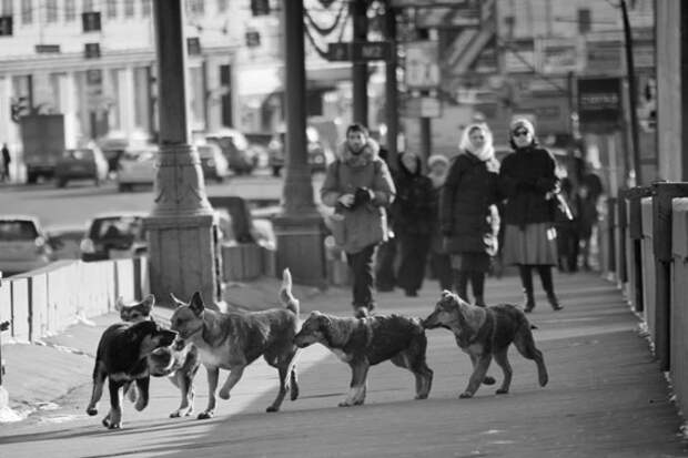Собакам с нами сильно не повезло