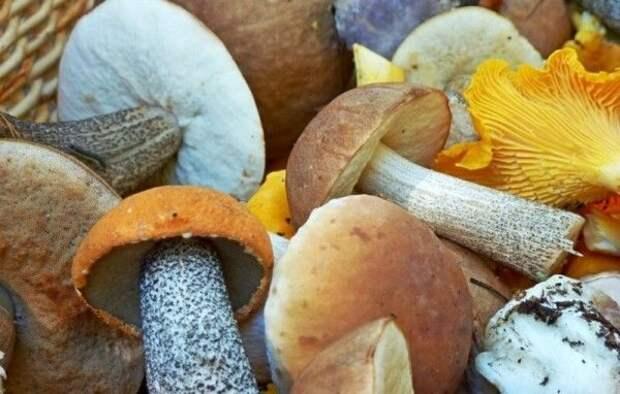 Почему народы севера не употребляют в пищу грибы?