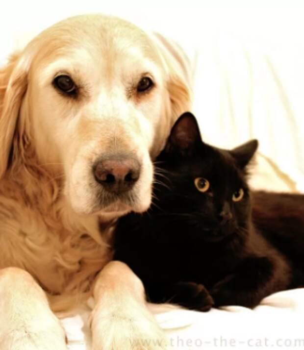Котенка бросили одного в подъезде, но кормящая собака приняла его в свою семью