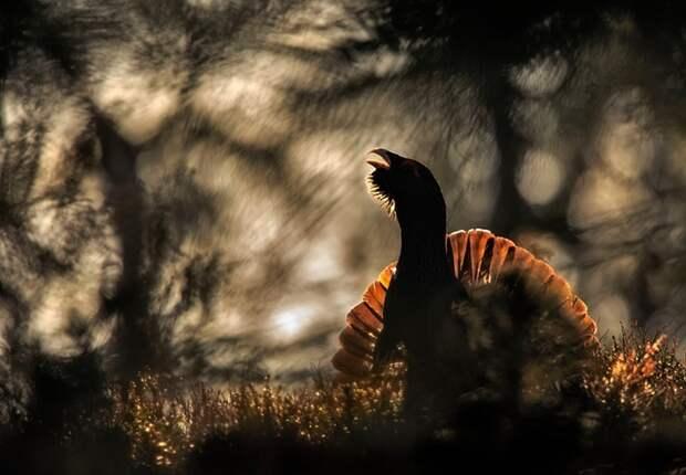 Фотограф дикой природы 2015