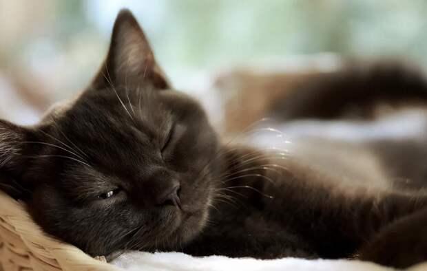 Почему кошки так много спят