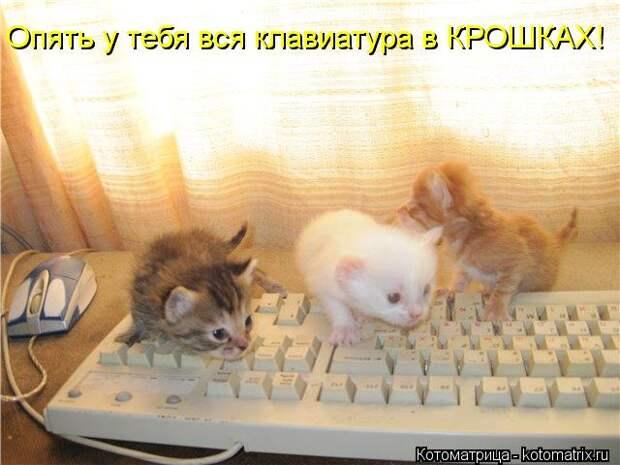 Котоматрица: Опять у тебя вся клавиатура в КРОШКАХ!