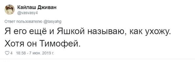 22. Тася Никитенко, животны, забавно, кот, кошка, люди, твиттер, юмор
