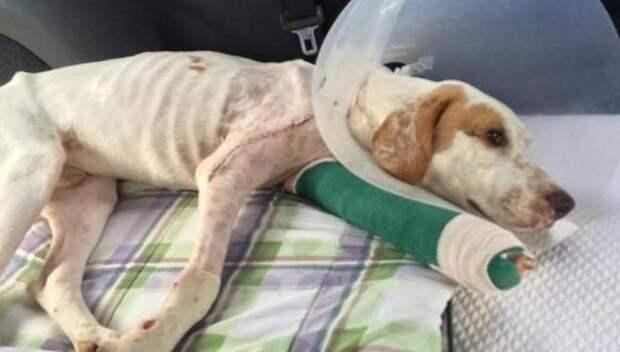 История спасения собаки, мечты которой сбылись в сочельник