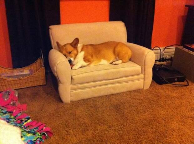 21 собака, знающая, как поудобнее устроиться на диване