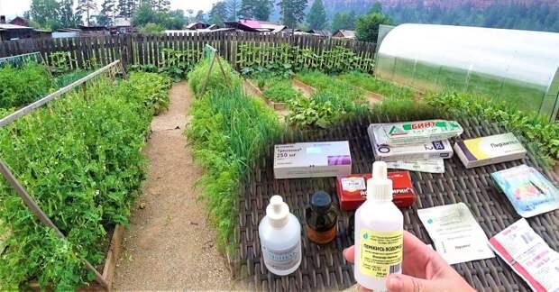Какие аптечные средства пригодятся для сада и огорода