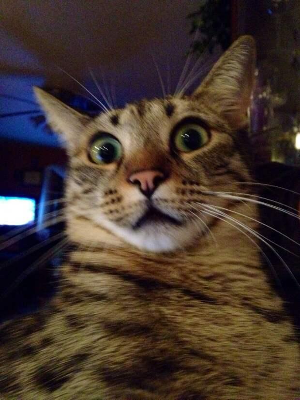 10. Серьезно? животные, коты, кошки, милота, питомцы, фото